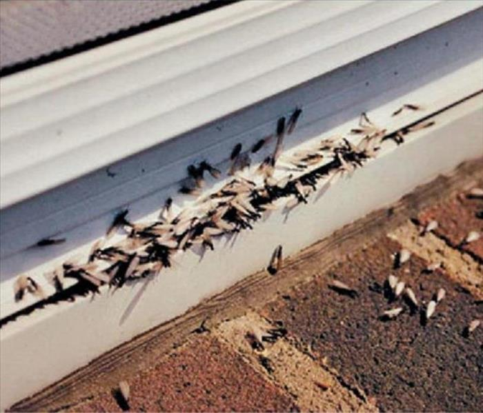 How Do You Know If You Have Termites Servpro Of
