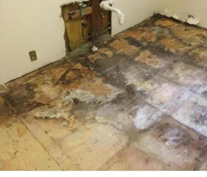 Mold Remediation Undetected Leaks
